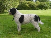 Hund's Zara