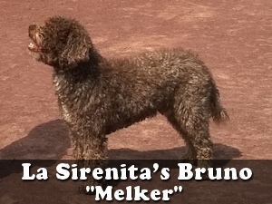 bruno-melker