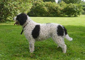 Hund's Sara